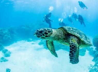 Vattensköldpadda